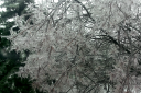 Ice_Tree_2.png