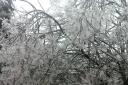 Ice_Tree_3.png